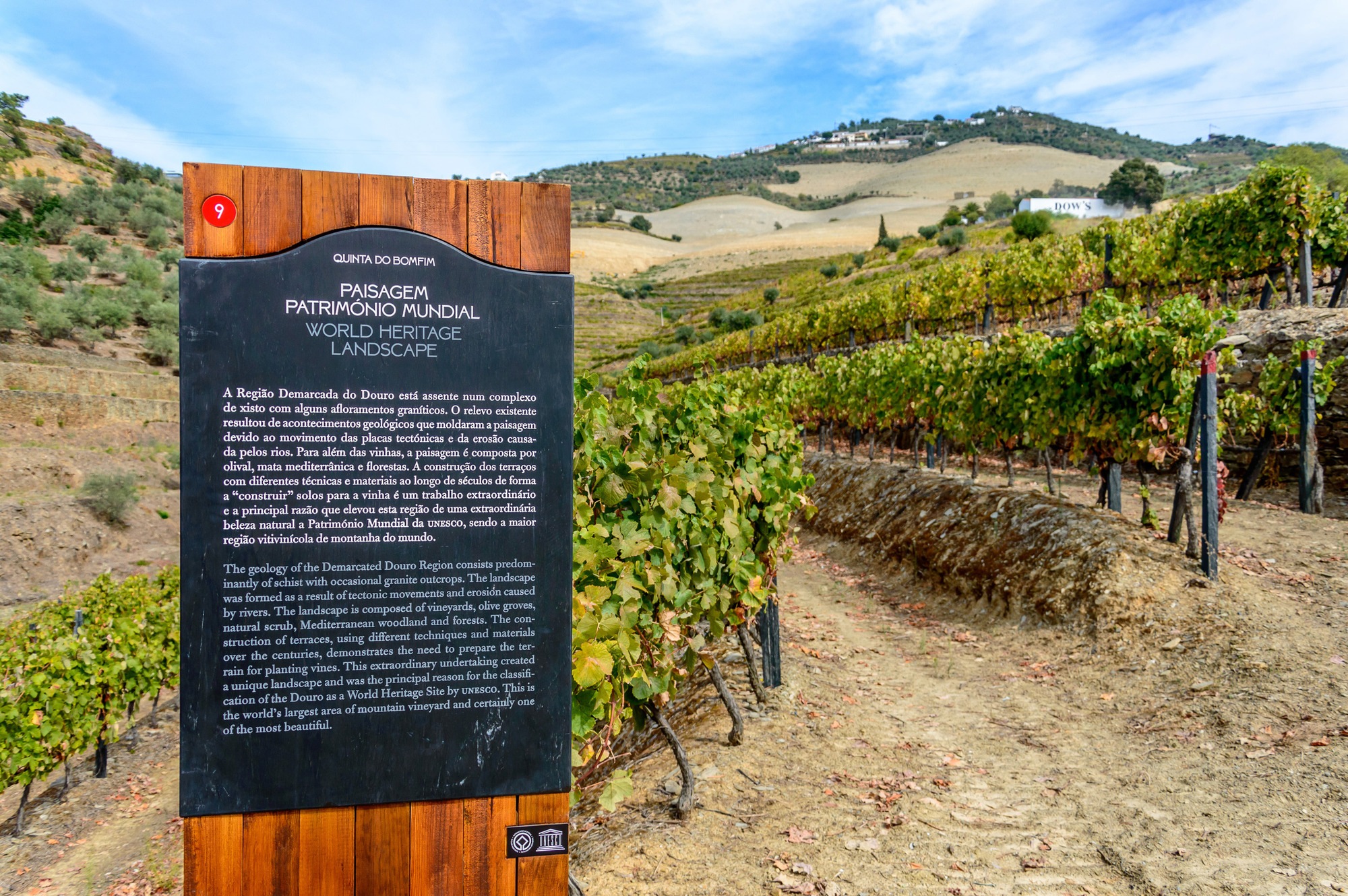 The vineyard walks are among the highlights of the visit