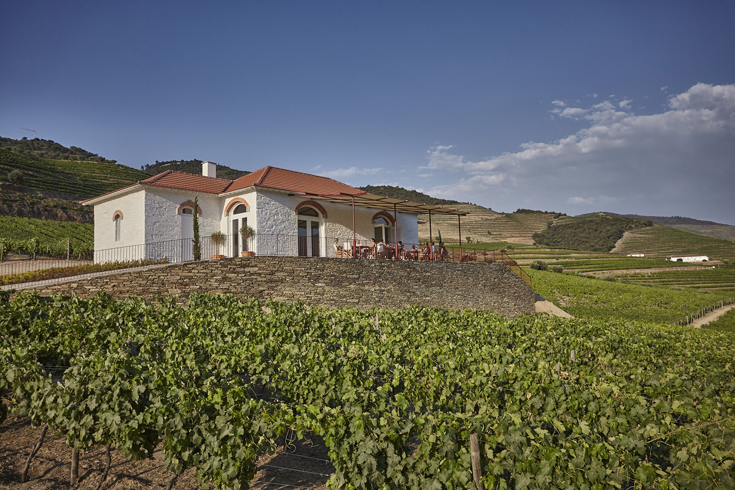 Echo House, surrounded by stunning vineyard scenery